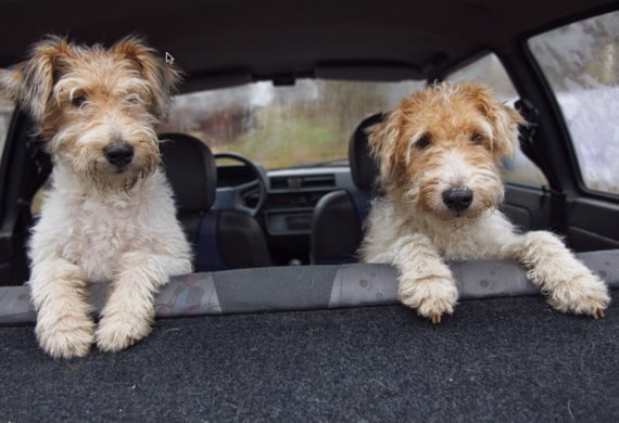 Car Safety When Travelling With Your Pets