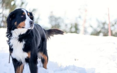 Fun in the Snow with Fido: Ways to Play with Your Dog in Winter